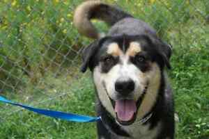 Badger is looking for his forever home!