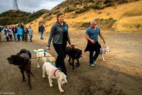 Dog Training - Dog Walking - Dog Behaviour Specialist