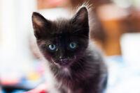 5 chatons mignons à donner