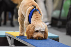 Agility Classes at The Dog Classroom