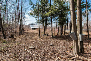 100 Acre Horse farm in Elgin with 1834 stone house West Island Greater Montréal image 10