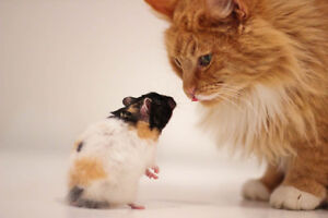 Cat visits and hamster boarding - professional, bonded & insured