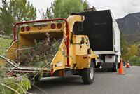 Professional Tree _Stumps and Shrubs Removal Service GTA.