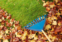 Leaf Clean Up, Property Clean Up, Maintenance