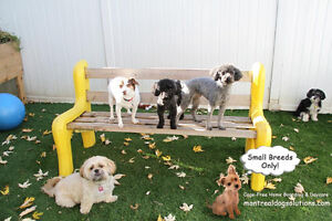 SLEEPOVER & PLAYDATES FOR SMALL DOGS CAGE-FREE West Island Greater Montréal image 1