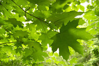 Maples All-around Property Maintenance (commercial &residential)