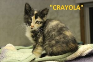 31 ADOPTABLE KITTENS & CATS - HANNA S.P.C.A.
