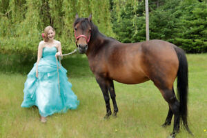 Free lease on lovely mare!