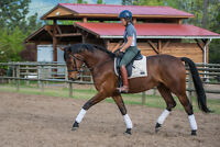 Lovely 4 yo gelding