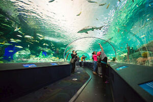 Ripleys Aquarium Of Canada Ticket Valid Anytime Adult Ripley's