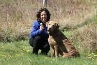 Red Dog Training - Private Dog Training