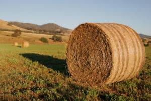 Free Standing Hay