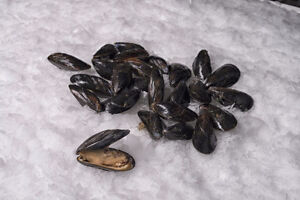10 Acre Mussel Seed Lease/License