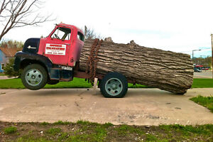 (WANTED) Large over sized Logs