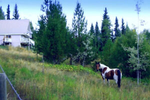 AFFORDABLE Hobby Farm on 3.968ac with Home & Stunning View