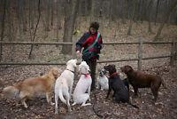 Dog Walking serving Roncesvalles and Bloor West Villages