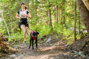 Join the FIRST sled dog sports lessons in New Brunswick!