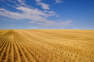 Farm land to buy or rent in Edenwold or Zehner area