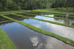 Cabin and fish farm on 8 acres! Cornwall Ontario image 3