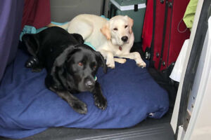 Caring Dog Walker For Guelph, Fergus, and Elora at Great Rates!