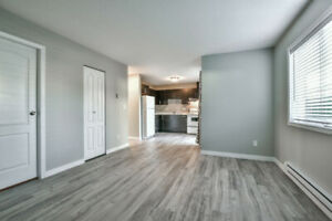 Fully Renovated Two Bedroom and One Bath