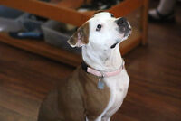 Cali - Happy and friendly girl