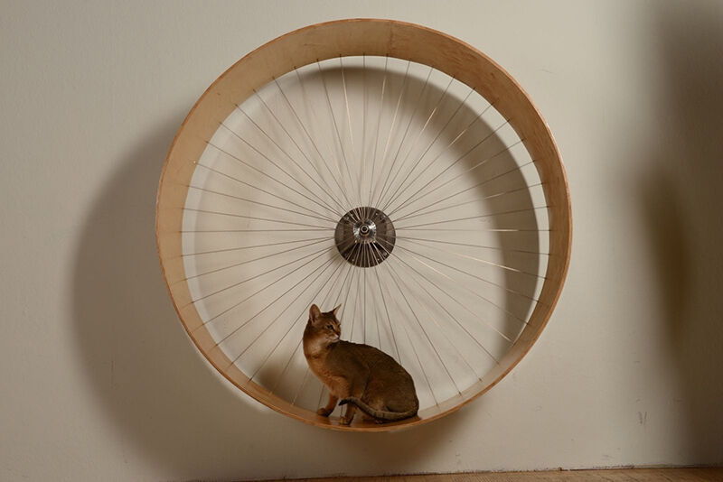 How to build a cat wheel ebay for How to build a cat