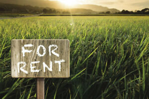 Land for Rent - RM 70 - 504 Cultivated Acres