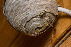 WASPs, Carpenter ANTs, Mice/Rats, Cockroaches, Call 647-956-5868
