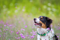 Free photo session for your dog contest!