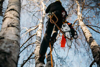 Free Quotes - Tree Pruning and Removals