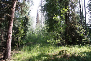 LOOKING TO BUY TREED ACRE COMOX to PORT ALBERNI