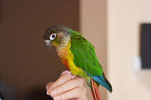 Experienced bird/small pet boarding & pet-sitting services