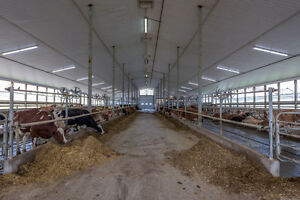SOLD Prime Dairy Farm in Ingersoll.Jersey Herd, Storage+2 Homes! London Ontario image 6