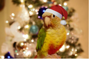 MERRY CHRISTMAS!!!! FIND THE PERFECT GIFT AT EXOTIC PETS!!!!!!!!
