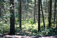 LOT FOR SALE - 10586 Pinecrest Rd, Vernon