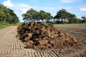 Need Manure/Compost for the garden ASAP