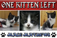 kittens litter of four one male curently available