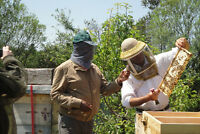 NATURAL BEEKEEPING COURSE BASED ON BIODYNAMIC PRINCIPLES