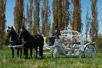 Horse Drawn Wedding Carriages and Sleigh