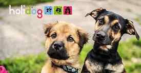 Part-time dog and cat sitters needed in Aberdeen