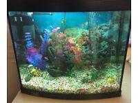 Aqua start 500 (65L) aquarium in black