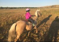 23 yr old Mare for Sale for Kid/Adult