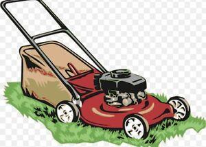 Lawn mowing an edges services Lalor Park Blacktown Area Preview