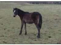 Young filly wanting a new home
