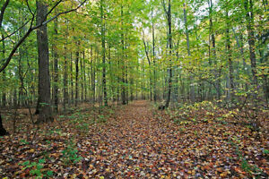 19.48 acre Country Property! - MLS #590903 London Ontario image 10