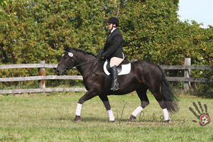 Beautiful mare available for lease Windsor Region Ontario image 4
