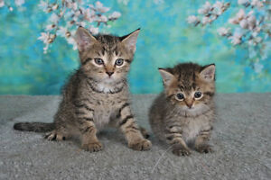 Kittens and cats looking for new homes