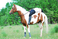12 year old 15.1 HH Paint appendix mare