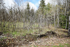 The Haliburton Real Estate Team- 3.91 Acres on Contau Lake Road